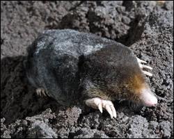 mole-control